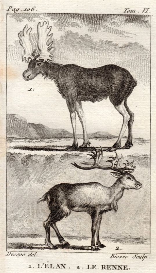 Buffon had an imprecise knowledge of the relative sizes of moose and reindeer, as well as much else about North America.